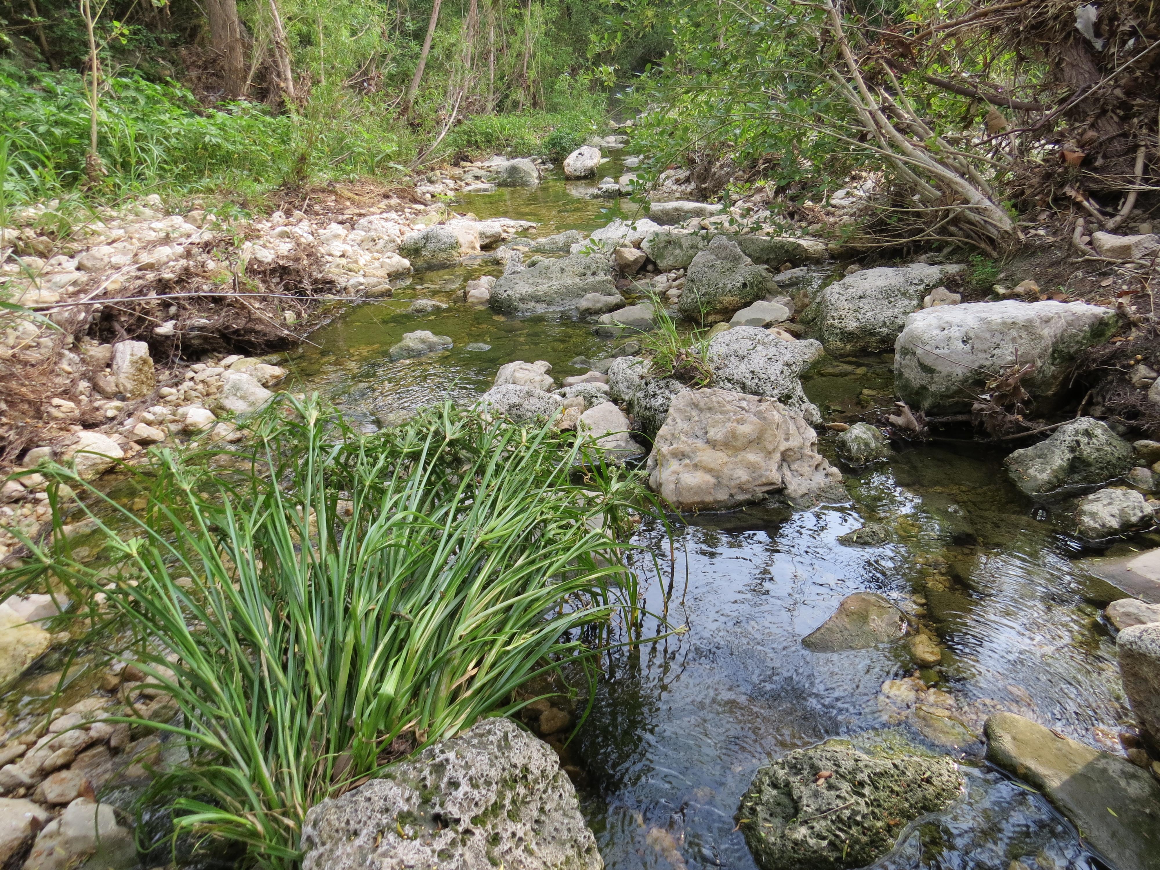 Creek Three